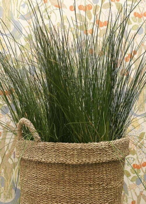 Carex Grass Seeds 25 Multi Pelleted Seeds Amazon Mist
