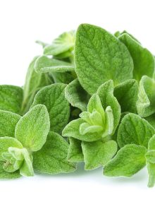Oregano-Leaves-White-Background