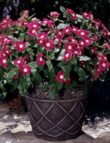 Pacifica-XP-Cherry-Red-Halo-Pot