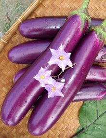 302-eggplant---purple-dream
