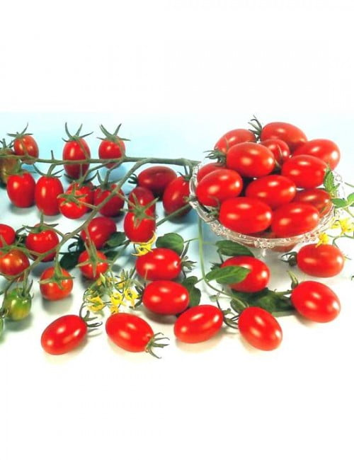 Cherry Tomato Red Ruby