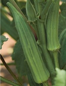 Okra Clemson Spineless SC