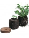 Peat Pellets With Plant
