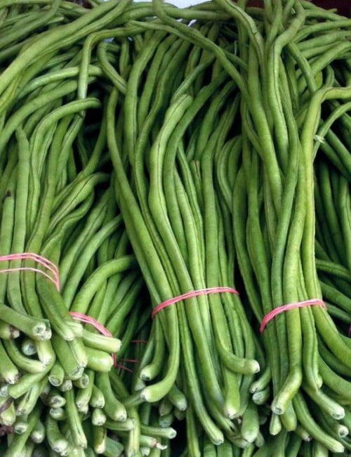 SC 308 Yard Long Bean – Evergreen (2)