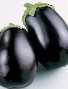 Eggplant Black Beauty SC 2