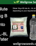 dilute B into water