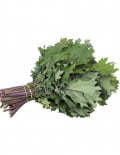 Red Russian Kale SC