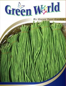 308 - Yard Long Bean-Evergreen