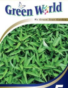 5 - Water Spinach