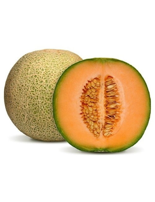 Rock Melon Sunshine Sweet SC
