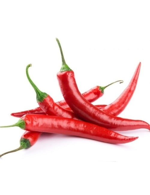 ge228-chilli-extreme-yield