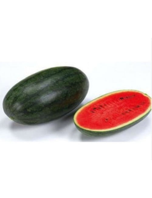 ge342-watermelon-red-oblong-pa