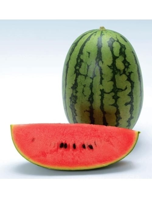 ge343-watermelon-red-oblong-ti