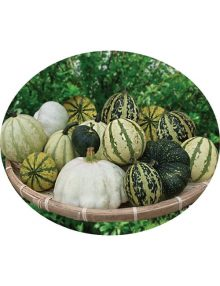 210-ornamental-pumpkin---hodge