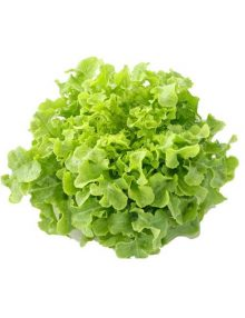 Lettuce Green Salad Bowl SC
