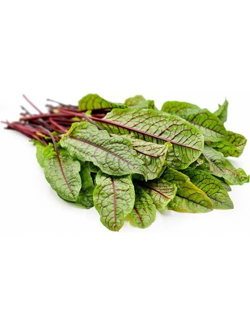 Red Veined Sorrel SC