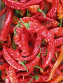 Pepper Hot Portugal