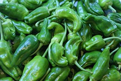 Pepper PatioPerfect Padron