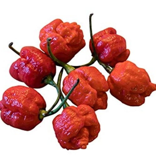 Pepper Trinidad Scorpion
