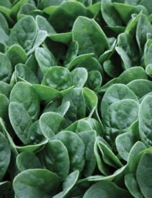 Spinach Seaside