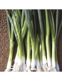 onion-green-banner-bunching-01