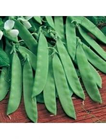 peas-oregon-sugar-pod-01-jpg