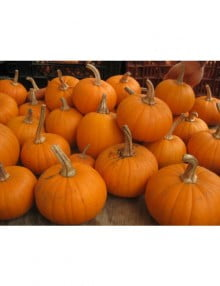 pumpkin-fall-splendor-01