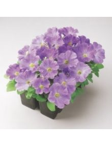 petunia-mirage-light-blu_SC