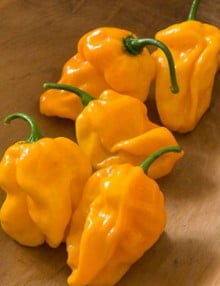 Pepper Numex Suave Orange