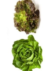 lettuce-butterhead-mix_sc