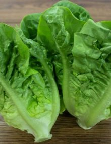 Lettuce Romaine Little Gem_SC