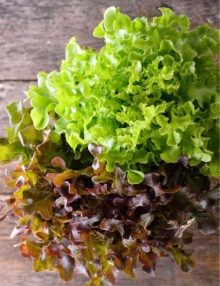 lettuce-salad-bowl-mix-oak-leaf-seeds_sc