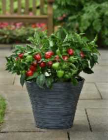Snackabelle Red Pepper