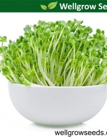 rocket-salad-microgreens